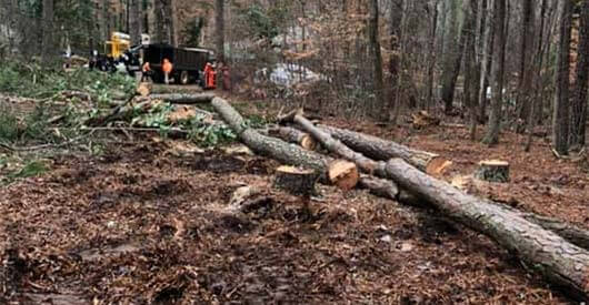 Clearing Lot of trees